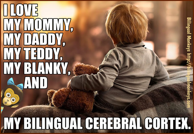 MY BILINGUAL CEREBRAL CORTEX.
